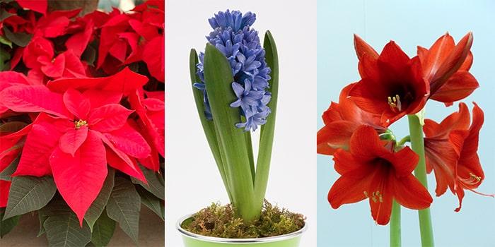 10 tips för bättre inomhusklimat - växter